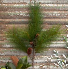 pine stem